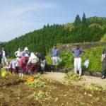 宮崎県日之影町中川地区「チューリップの掘り起こし」