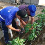 農作業第2段