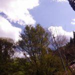 春のお祭り前日のお手伝い ~諸塚村八重の平地区~ その2