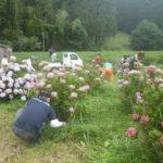 宮崎市高岡町飯田地区「あじさい畑の下草刈りのお手伝い」