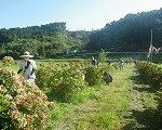 宮崎市高岡町飯田地区「あじさい広場の下草刈り」
