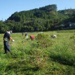 今年最後の宮崎市高岡町飯田地区「あじさい広場の下草刈り」のお手伝い